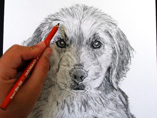 How to learn to draw dogs?
