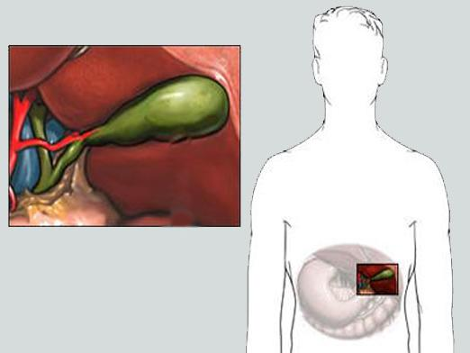 What makes bile?