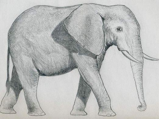 How to draw an elephant?