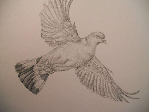 How to draw a pigeon?