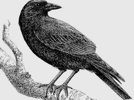 How to draw a crow?