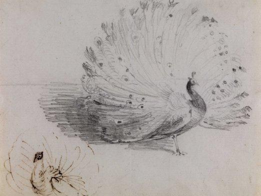 How to draw a peacock?