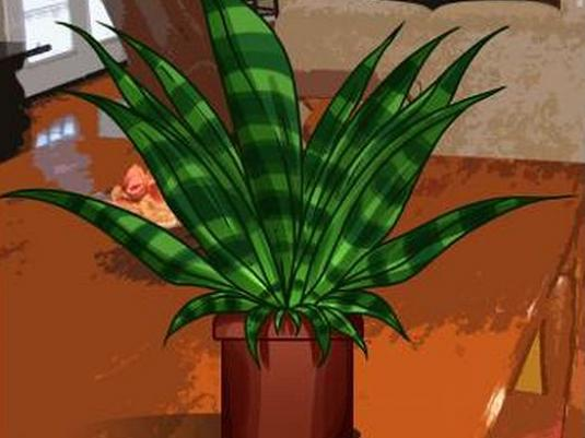 How to draw a plant?