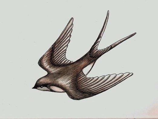 How to draw a swallow?