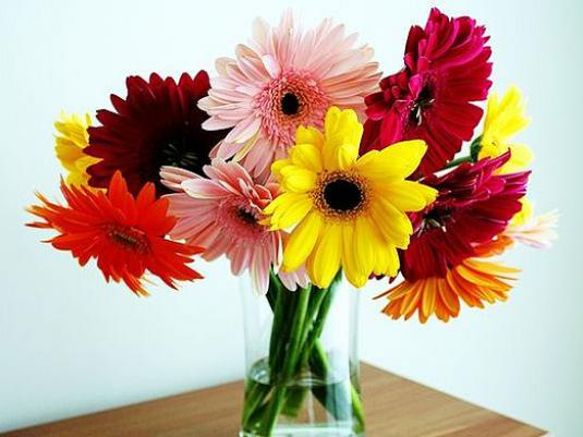 How to save gerberas?