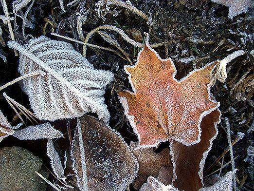 What is frost?