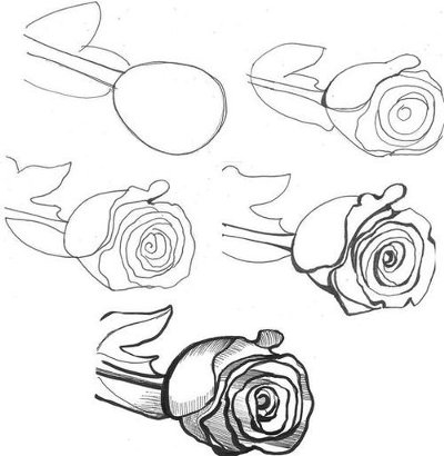 Drawing roses in ink