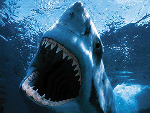 How many teeth does a shark have?