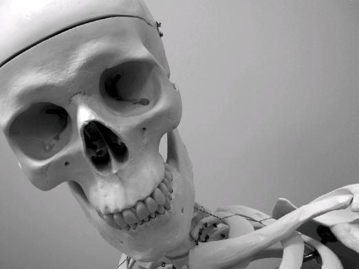 How many bones does a person have?