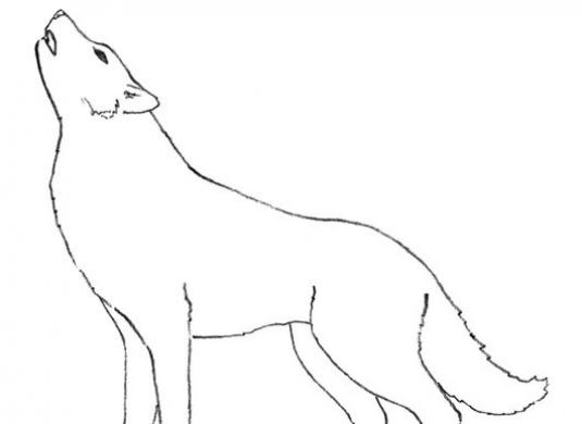 How to draw a wolf with a pencil?