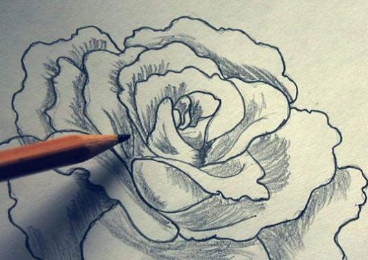How to draw a rose pencil in stages?