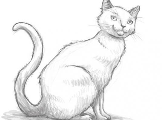 How to draw a cat with a pencil?