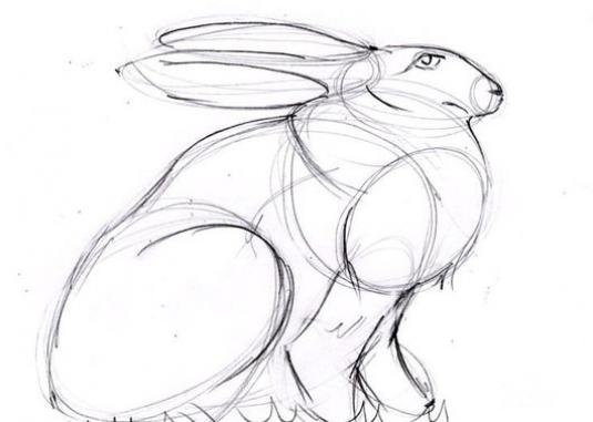 How to draw hares?