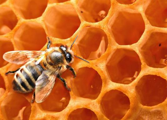 What is useful honeycomb?