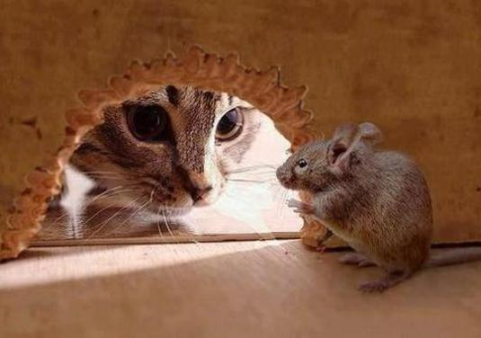 How to catch mice?