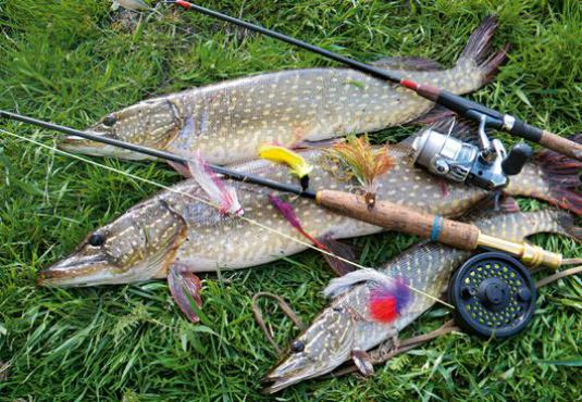 Why catch pike in the fall?