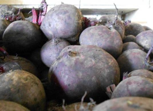 How to save beets in the winter?