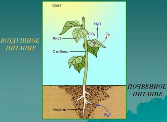 How do plants feed?