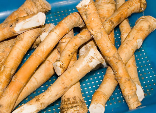 How to save horseradish in winter?
