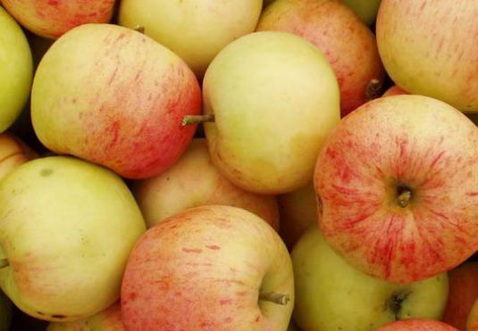 How to save apples for the winter?