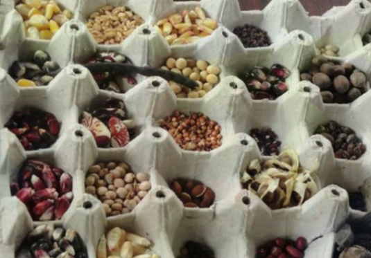 How to store seeds?