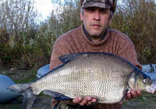 What to catch bream?
