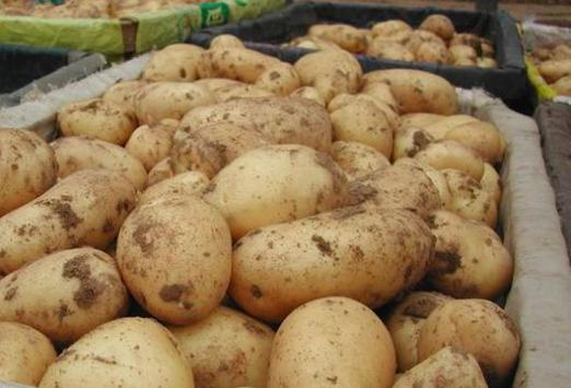 What foods contain starch?
