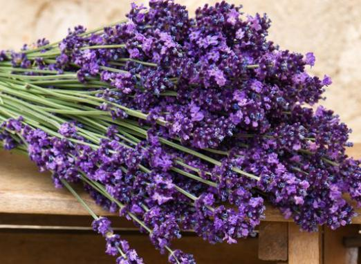 How to grow lavender?