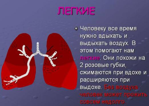 What are the lungs for?
