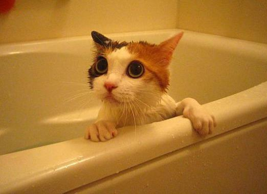 How often to wash the cat?