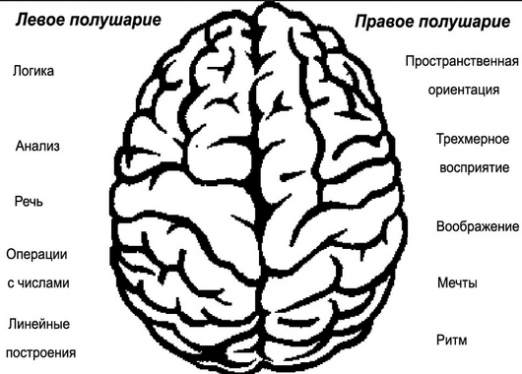 What is the left hemisphere responsible for?