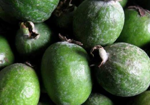 What is feijoa useful for?