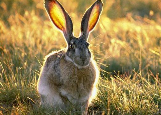 What is he: a hare?