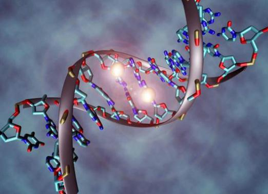 What is studying genetics?