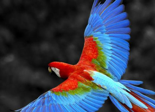 What is macaw?