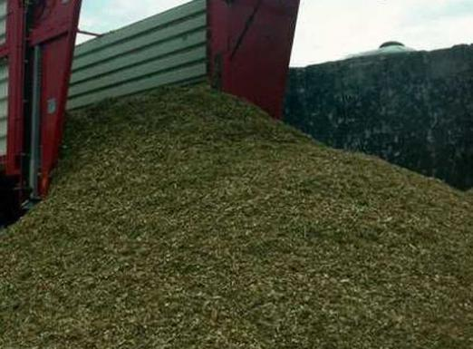 What is silage?