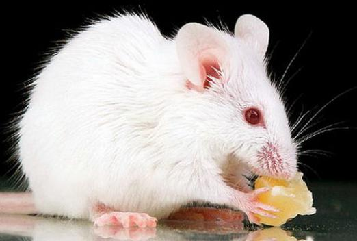 Why dream of a white mouse?