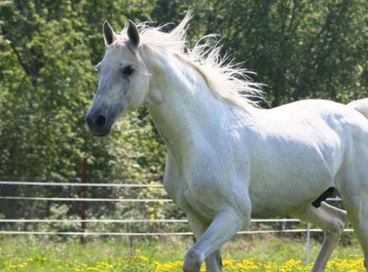 Why dream of a white horse?