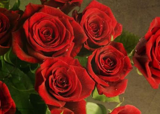 What dreams of red roses?