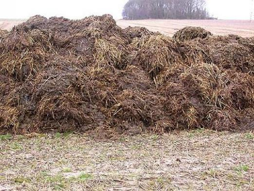 Why dream of manure?