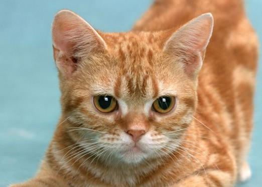 Why dream of a red kitten?
