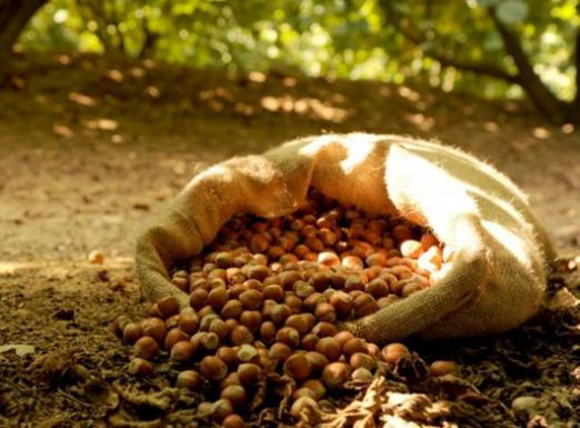 How to dry nuts?