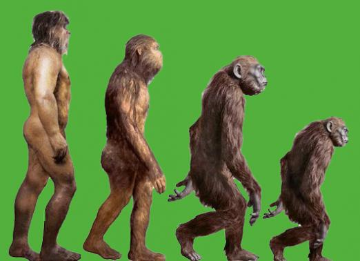 What is involution?