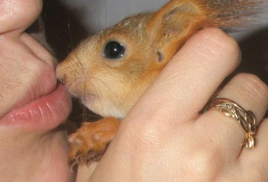 Where to buy a squirrel?