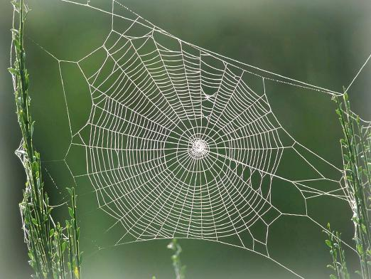 Why dream of a web?