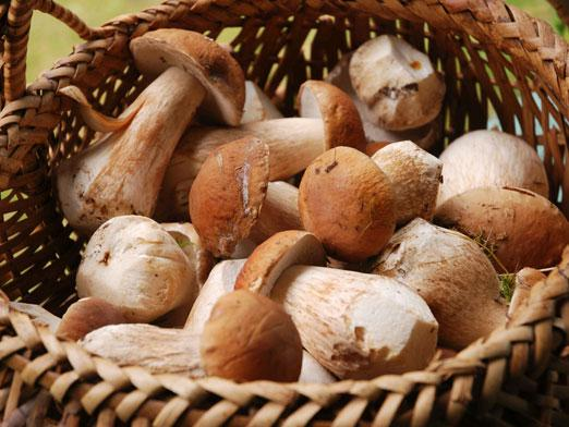 When to pick mushrooms?