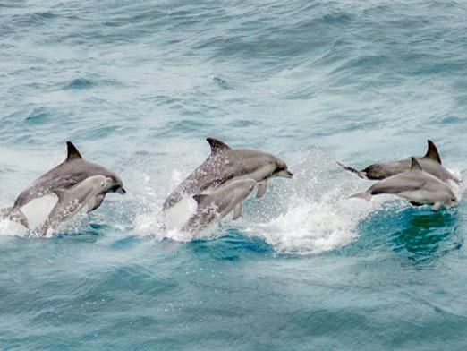Do dolphins eat?