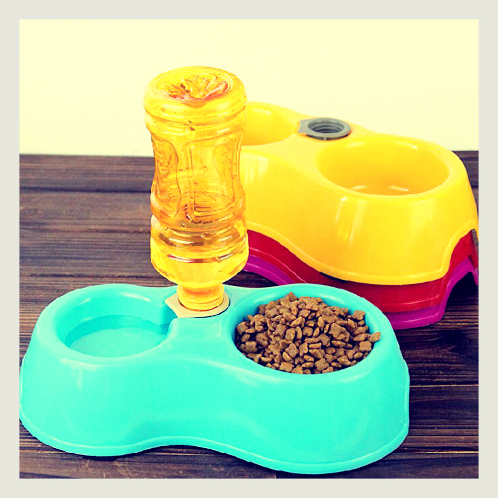 Dry food and water for a kitten.