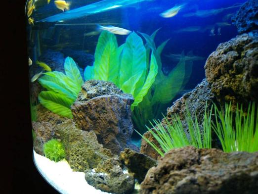 How much to defend the water for the aquarium?